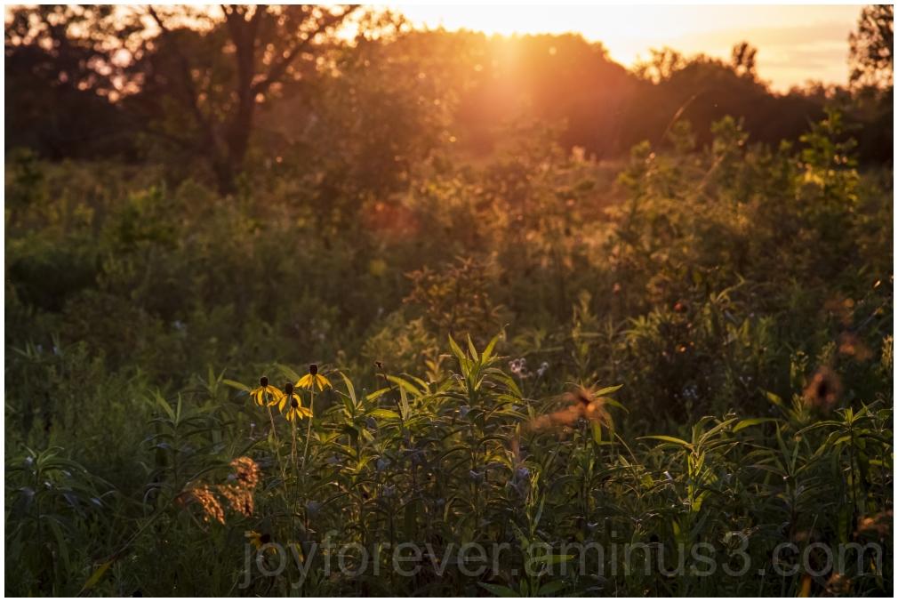 Middlefork Savannah prairie sunset tree sunlight