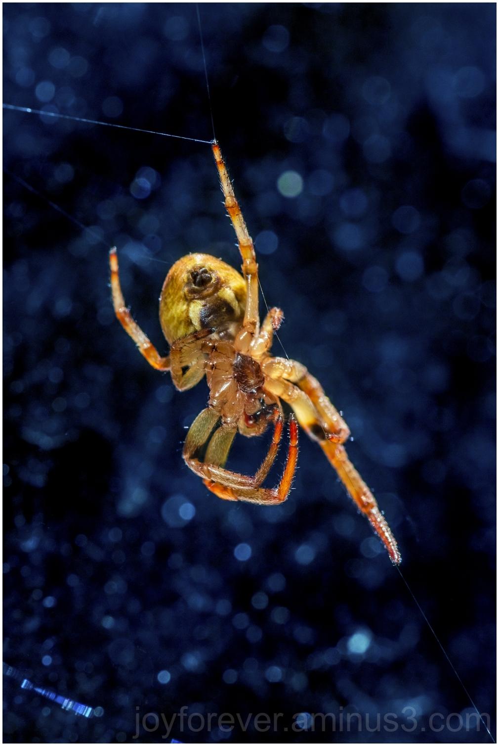 spider macro web archnid insect closeup window web