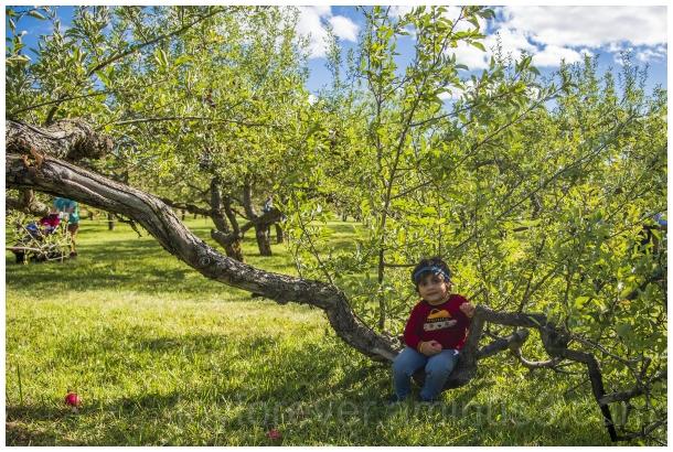 apple tree fall autumn apple-picking toddler girl