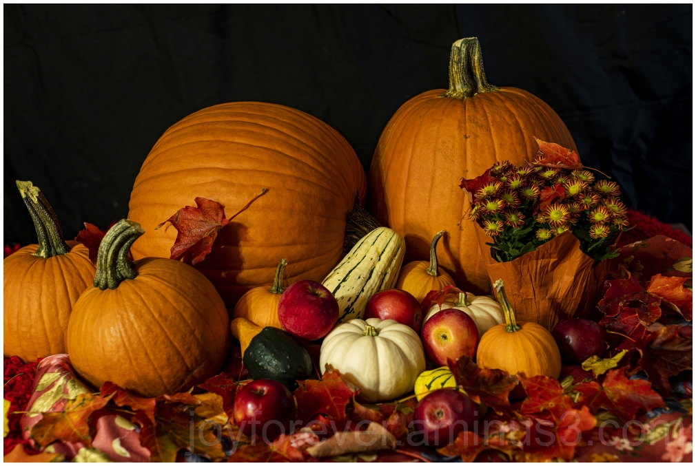 stilllife fruits vegetables Pumpkins art Fall