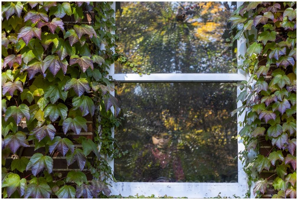 window ivy plant vine indoors Fall backyard
