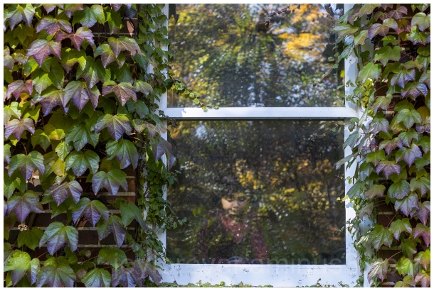 window ivy plant vine indoors Fall backyard