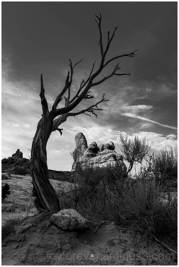 ArchesNationalPark tree TurretArch Utah B&W