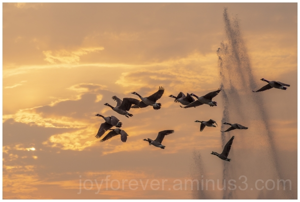 goose geese birds flying sunset fountain clouds