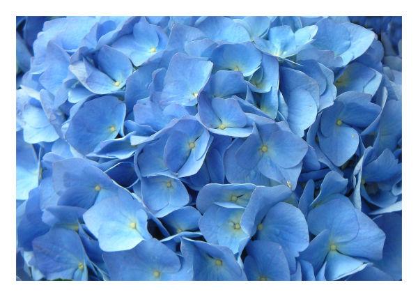 .. Blue Easter ..