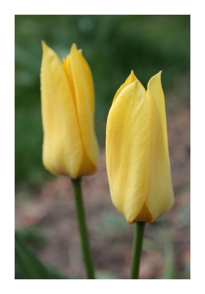 .. yellow ..