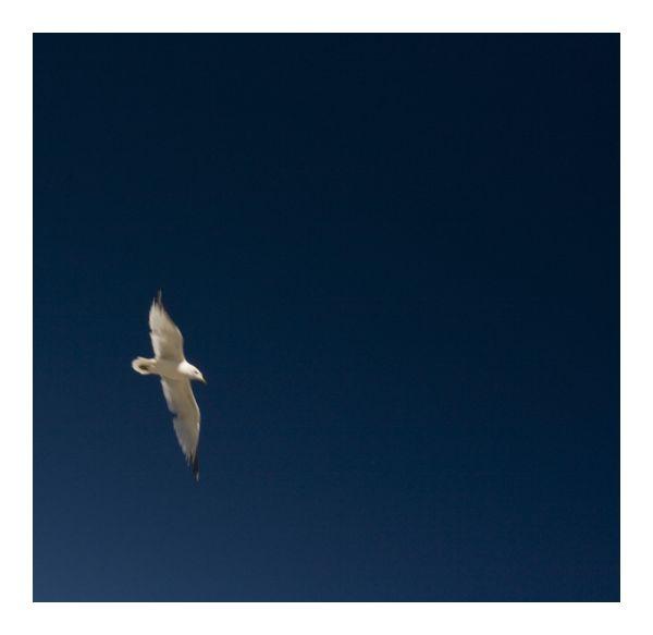 flight ..