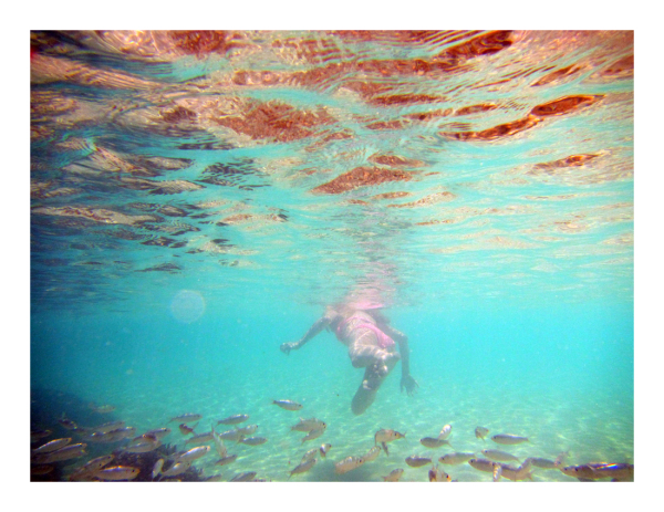 Snorkeling the Shallows