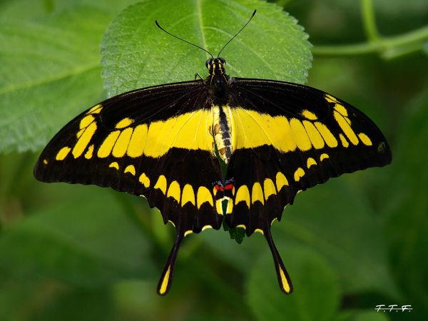 Jardin aux papillons !!!