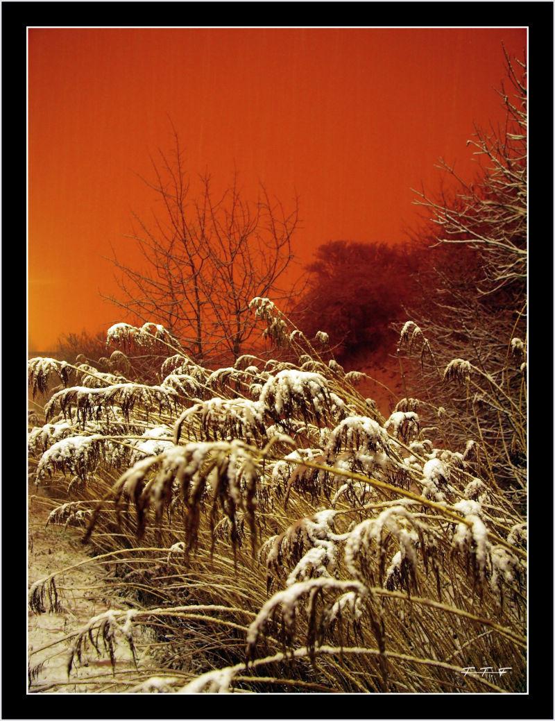 Sous la neige !!! (2)