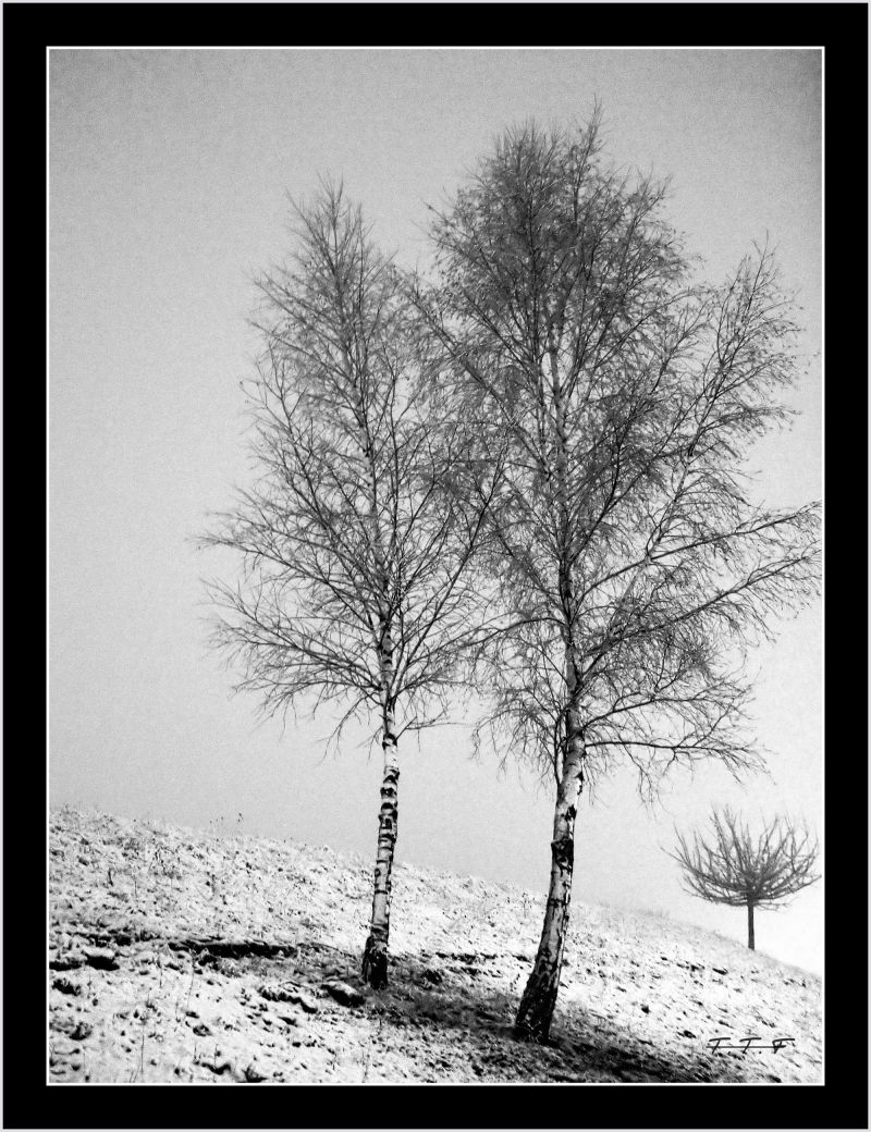 Sous la neige !!! (4)