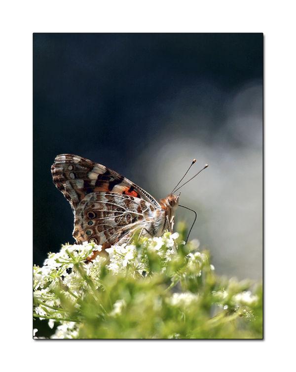 un papillon ca pompe énormément  !!!