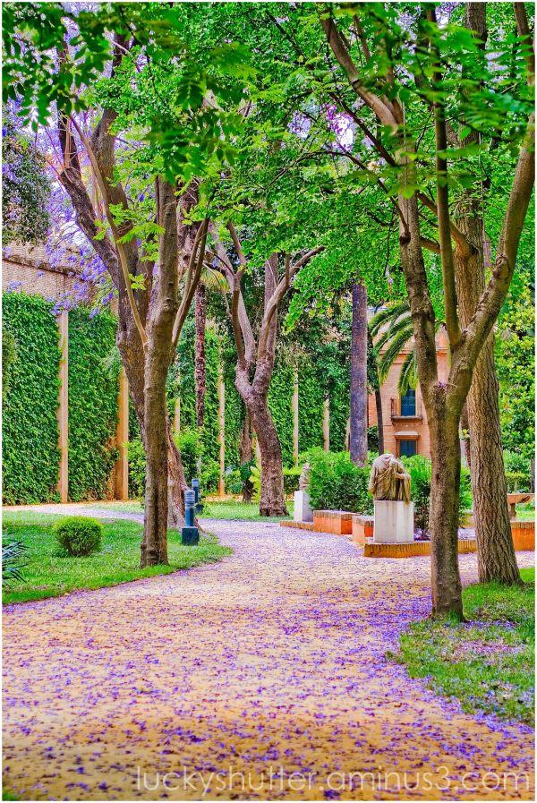 Purple petals on the path