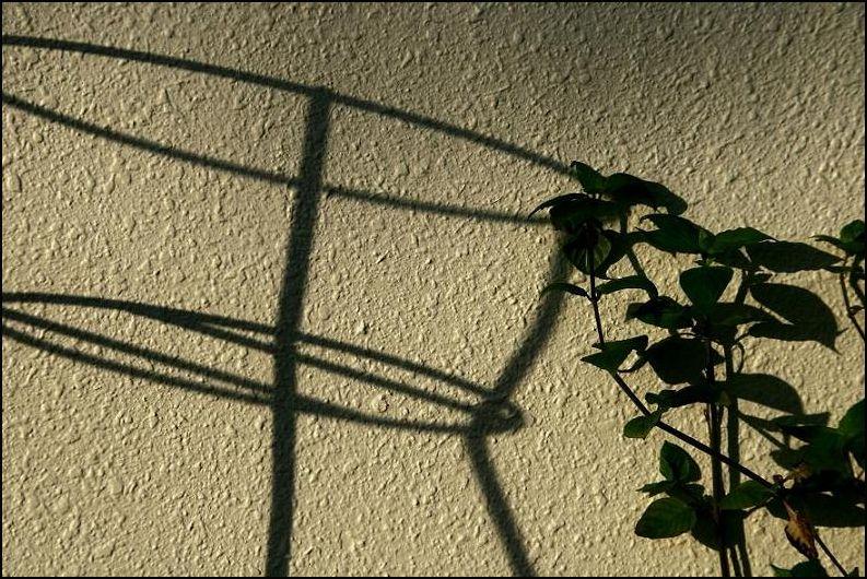 plant & shadow