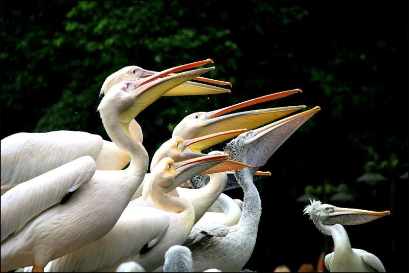 all the beaks