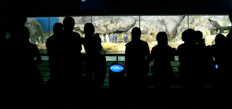 penguin watchers