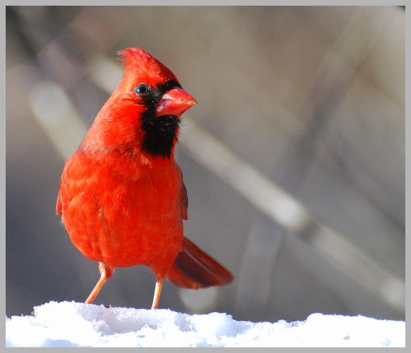 Red dress to impress...