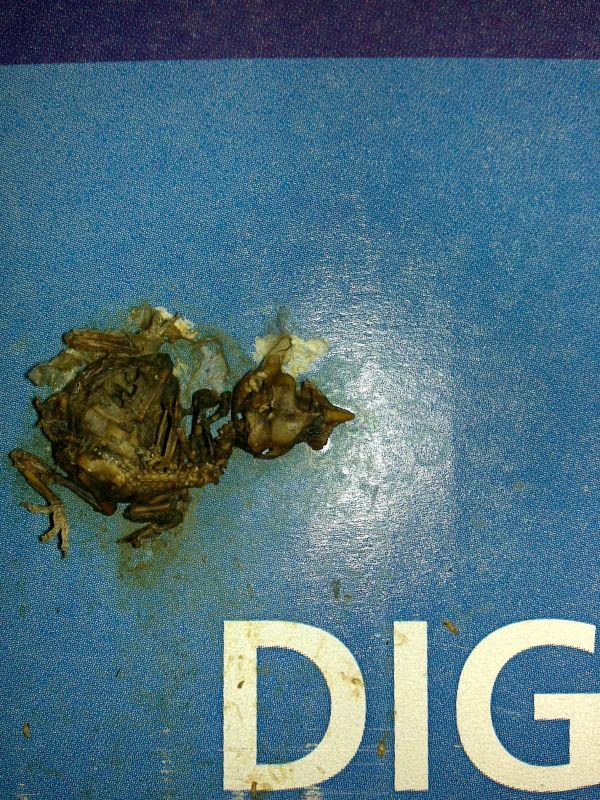dead mouse blues