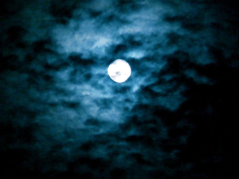 blue moon elvis presley dark dude