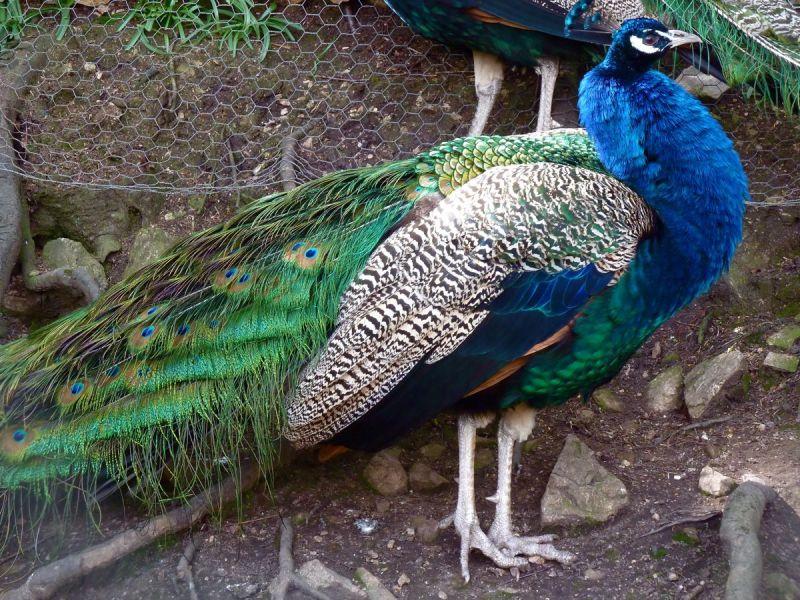 succubus annette peacock dark dude