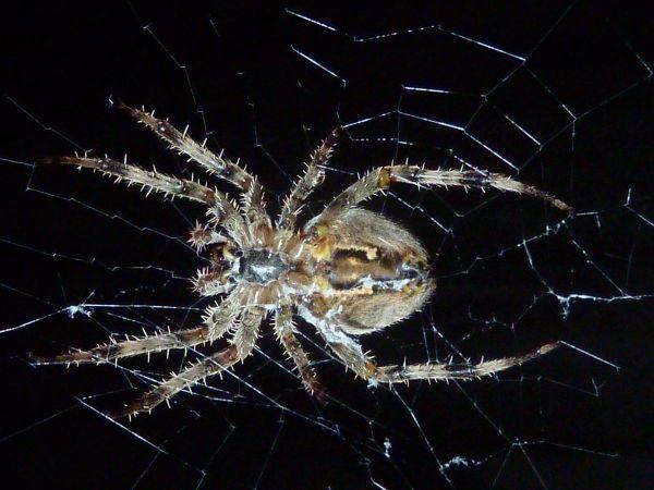 apologies insect life british sea power dark dude