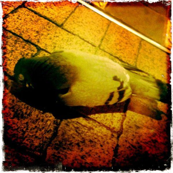 dead bird sings baby bird dark dude