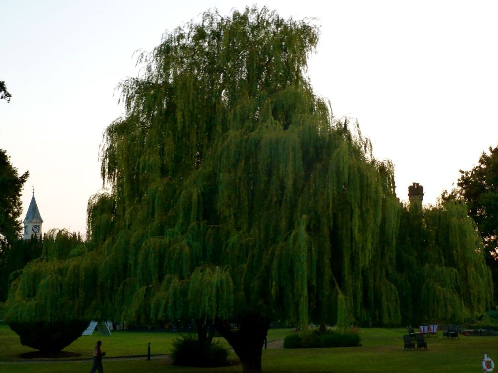 underneath weeping willow grandaddy dark dude