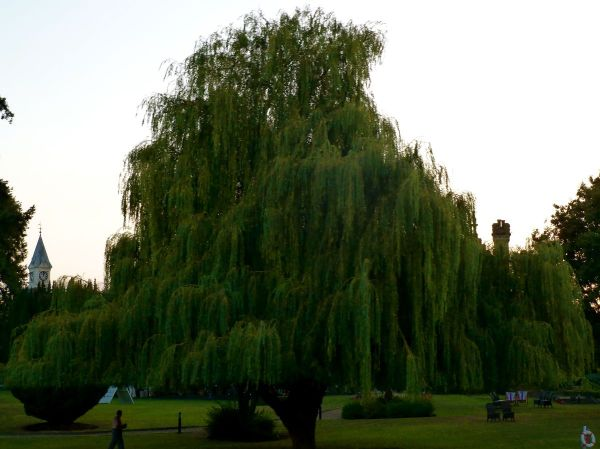 underneath weeping willow grandaddy dark dude