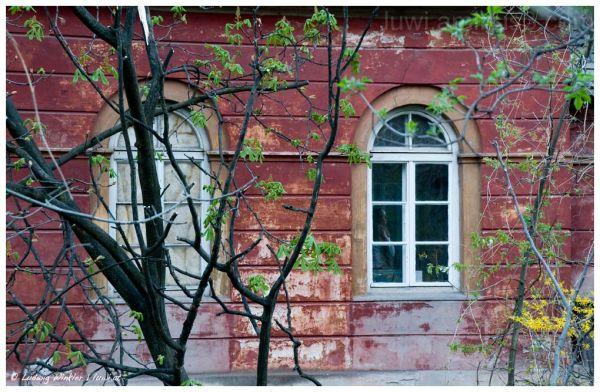 beauty in the window