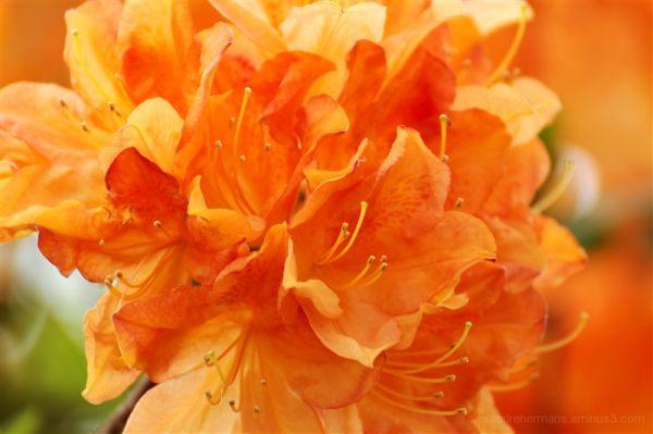 King's Flowers 5/6