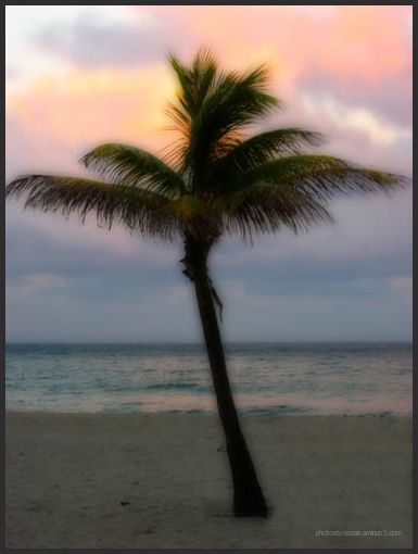 Palm on the beach at sunset
