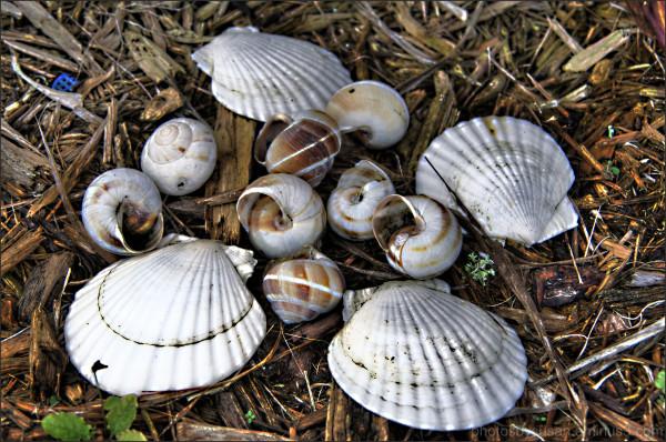 She sells seashells......