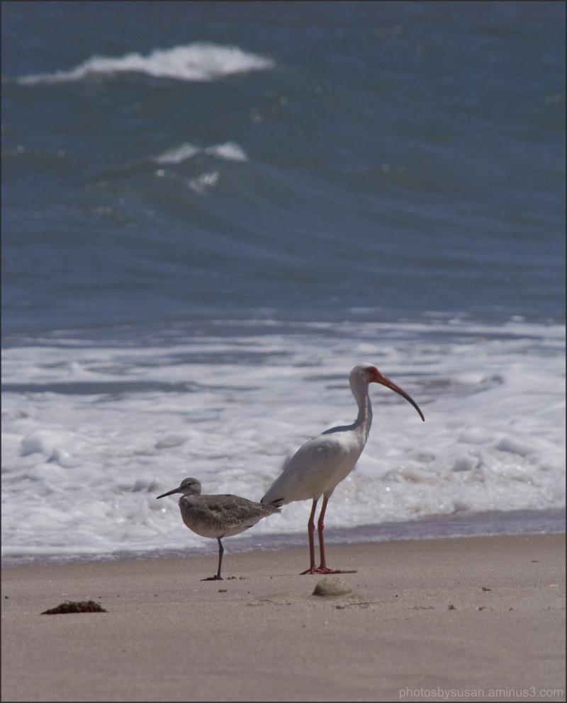 Birdies on the Beach