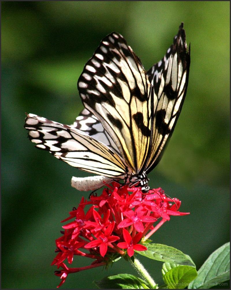 Nature's Splendor