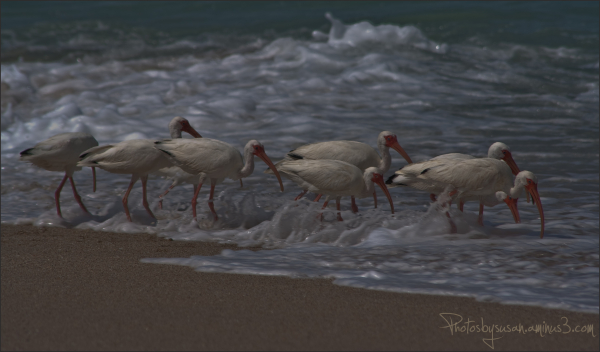 Ibis Lunch