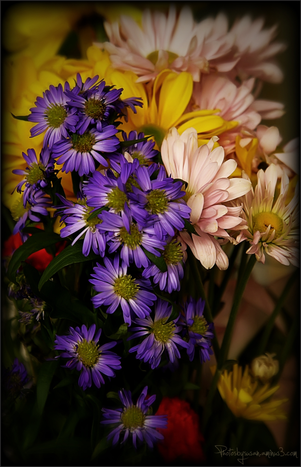 Filtered Flowers