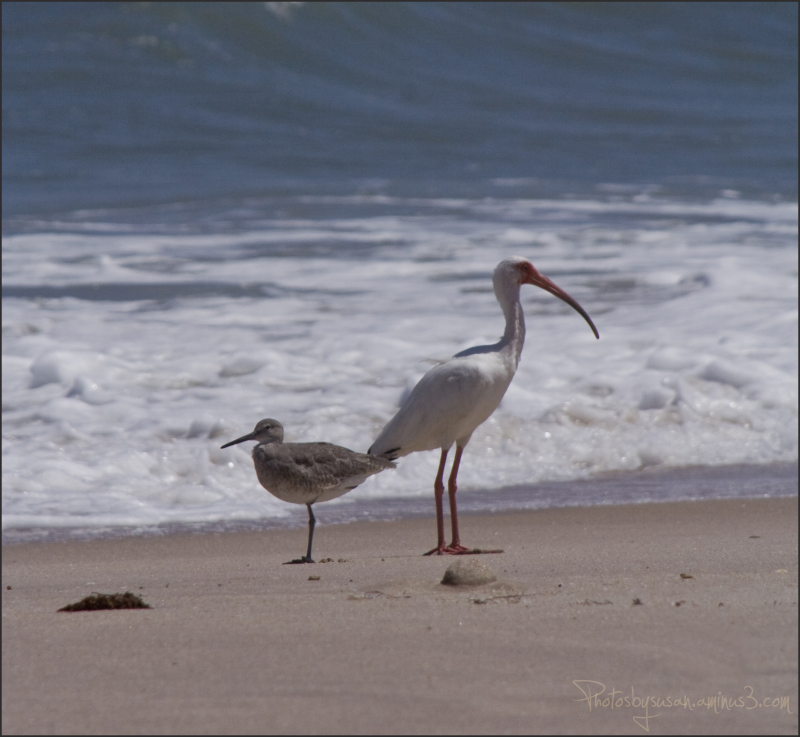 Pelican and Gulf Coast Solidarity
