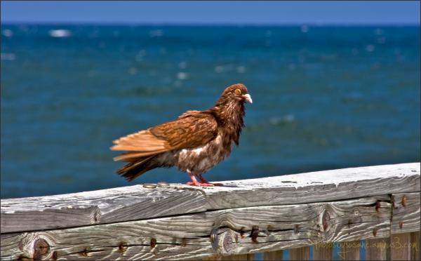 Seabirds still safe