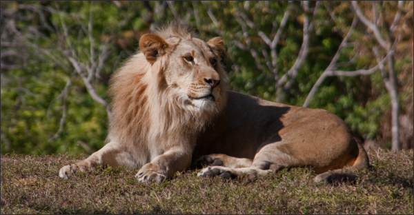 King of the Jungle......