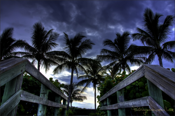 Palms Stand Watch