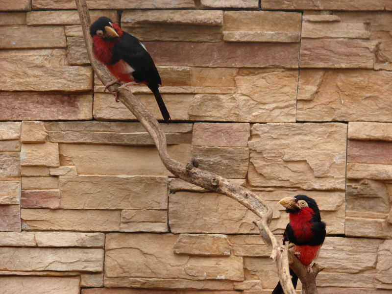 birds at the zoo