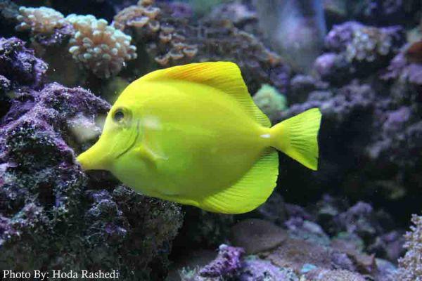 ماهی از پشت شیشه
