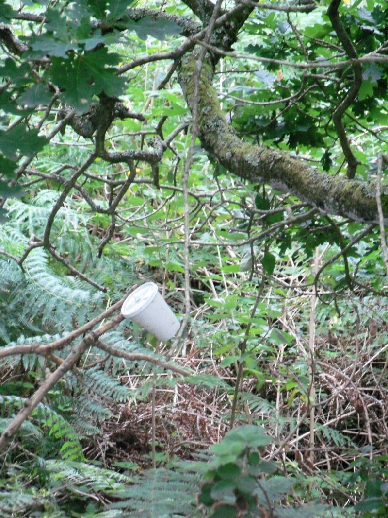 Nature/Items in trees/Drinks receptacles/no.2: Cup