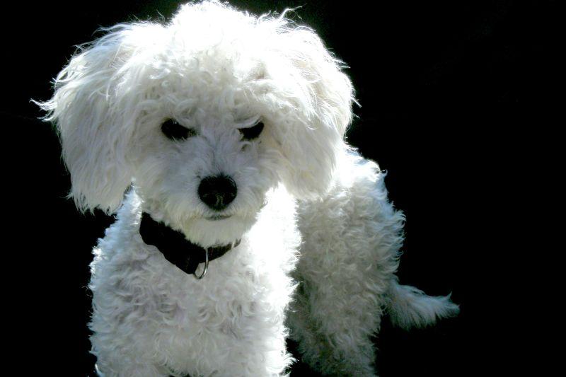 Our family puppy: Boni