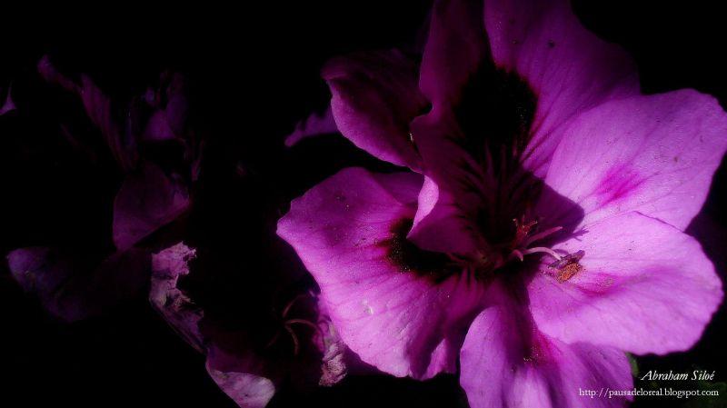 Flor en mi obscuridad