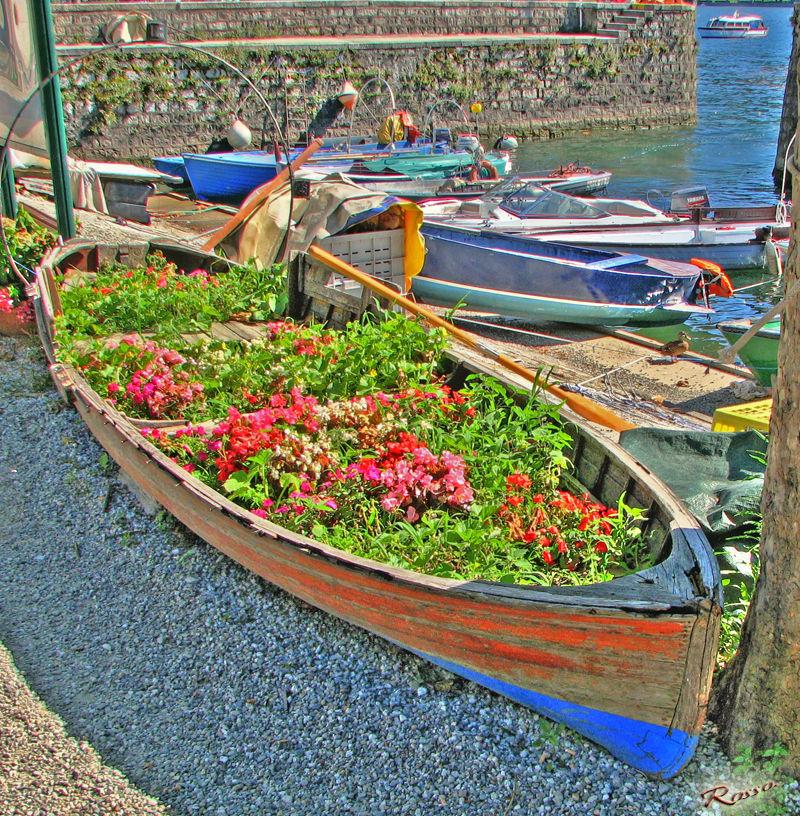 Barca in fiore