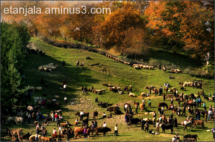 the county fair in Vrancea, Romania