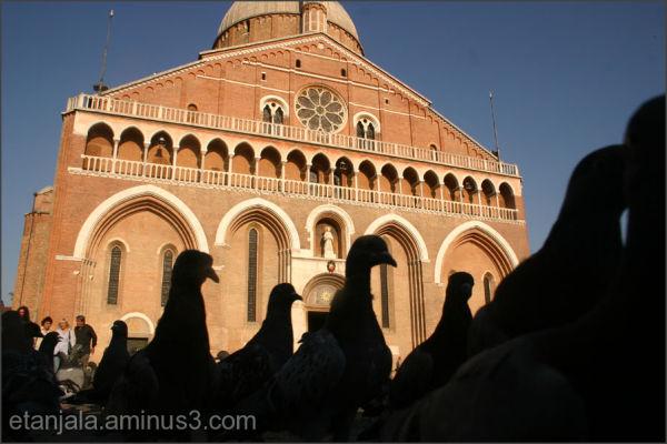 The inhabitans of Padova