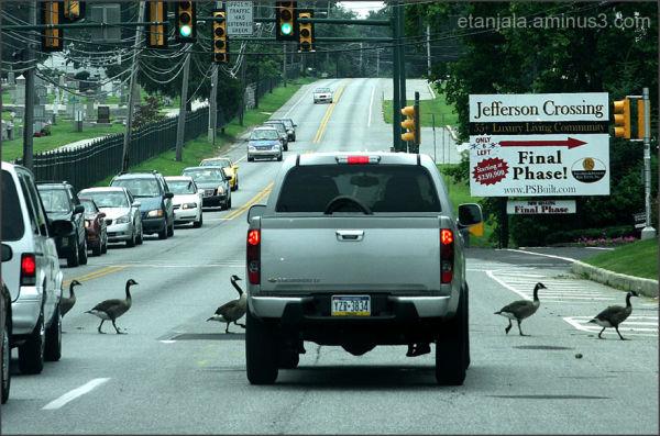 Cross America- Crossing in Pennsylvania