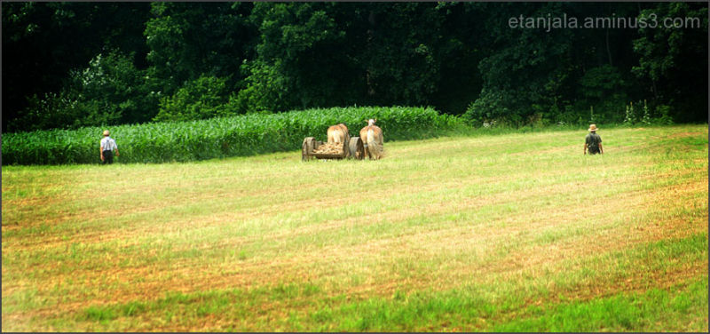 Cross America- Amish community in PA (7)